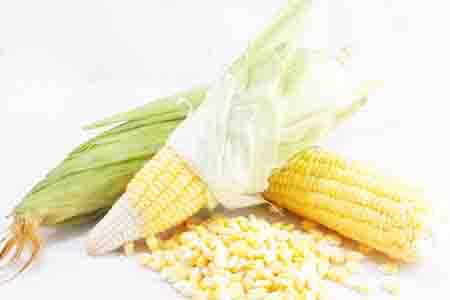 Bắp ngô, hạt ngô, cẩm nang cây trồng