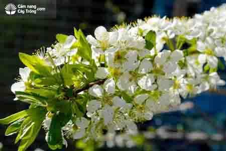 Cẩm nang cây trồng, chuyện lạ: cây có 40 loại quả 4