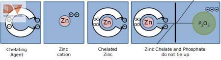 Cấu trúc vi lượng chelate