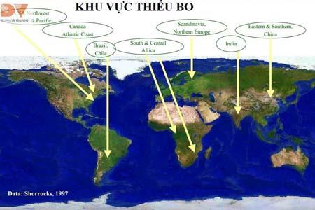 Khu vực thiếu Bo trên thế giới