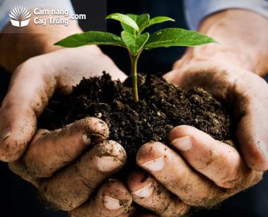 Tác dụng của mùn hữu cơ đối với cây trồng