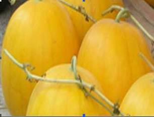 Vỏ quả màu vàng