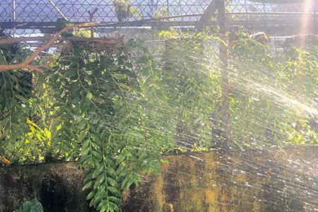 Tưới nước cho cây Lan đạt độ ẩm 60-70%