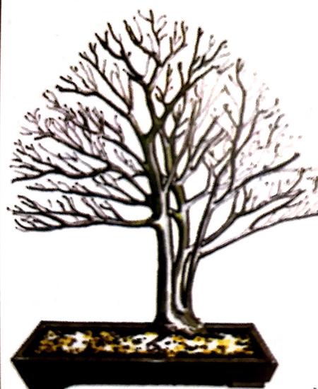Phong cách, dáng thế cây nhiều thân chính đa dạng