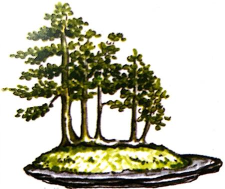 Phong cách, dáng thế cây từ những cành mọc thẳng trên một thân chính nằm đổ ngang